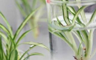 Водный сад в вашей квартире