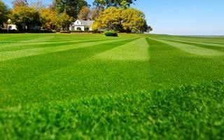 Процедура ухода за газоном и тонкости скашивания травы