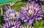 Красочные листья в осеннем саду: выбираем композиции растений