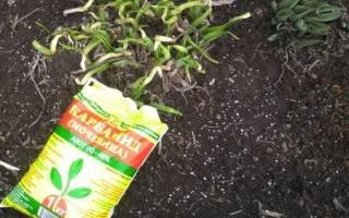 Подготовка сада к весне: первая подкормка растений
