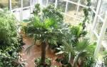 Зимний сад на балконе своими руками (фото и видео)