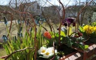 Правильное сочетание цветов в вашем саду